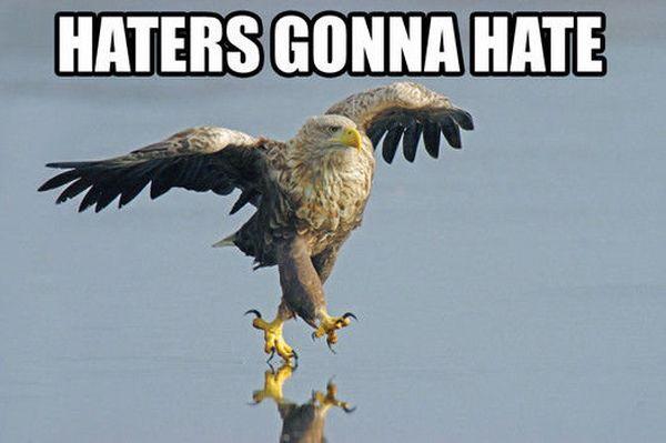 Название: funny-pictures-haters-gonna-hate-eagle-walking-water.jpg Просмотров: 816  Размер: 29.3 Кб
